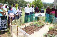 En Michoacán, el campo cosecha resultados