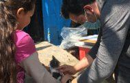 Realizan campaña de vacunación antirrábica canina y felina en todo Ecuandureo.