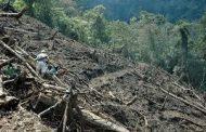 Urge frenar la deforestación en Michoacán
