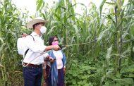 Agricultura Sustentable le ha cambiado el rostro al campo michoacano