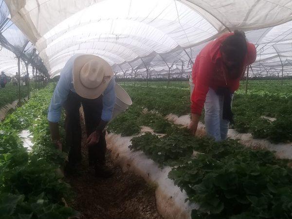 Mujeres rurales factor de cambio en salud, economía y alimentación de familias
