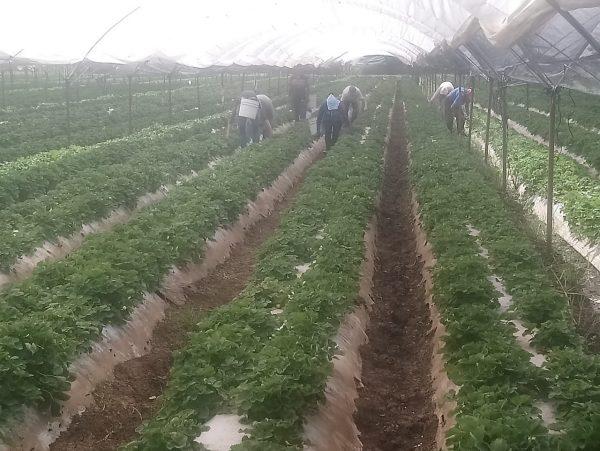 Más de 500 hectáreas afectadas por cultivo de aguacate; peligra agricultura