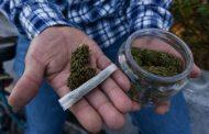 Consumo de marihuana es igual o menos dañino que otros vicios: Zamoranos