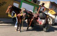No prospera prohibición para usar animales en mal estado en carga