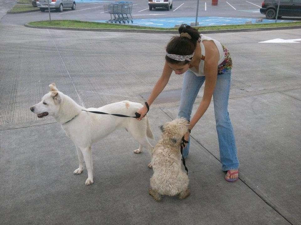 Buscan frenar el abandono de perros en calles