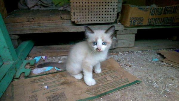 Aversión a los gatos, provoca sufran maltrato, abandono y envenenamiento