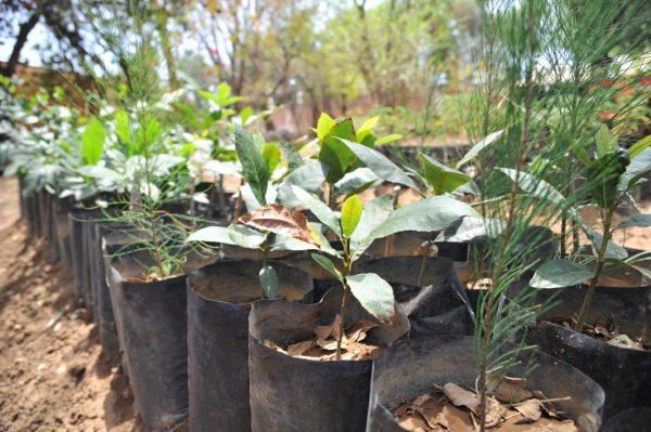 Gobierno de Jacona se anticipa con trabajos para próxima reforestación