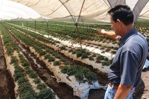 Para incrementar rendimientos de cultivos, productores deben acudir a SEDRUA