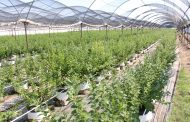 Mas de mil hectáreas beneficiadas con programa de agricultura sustentable en región Lerma-Chapala