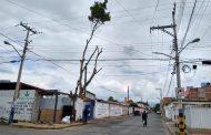 Árbol frondoso ubicado en calle Michoacán y Morelos fue podado en totalidad