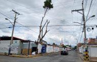 Lagunas jurídicas impiden frenar tala de árboles en zonas particulares