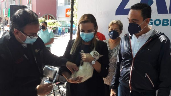 Aplicarán 7 mil vacunas para perros y gatos en Zamora