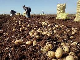 Insumos agrícolas a la alza y apoyos al campo a la baja: Jorge Hernández
