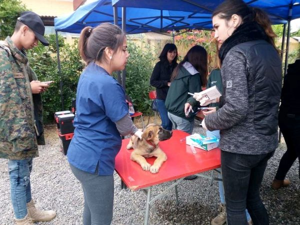 En puerta campaña de esterilización canina y felina