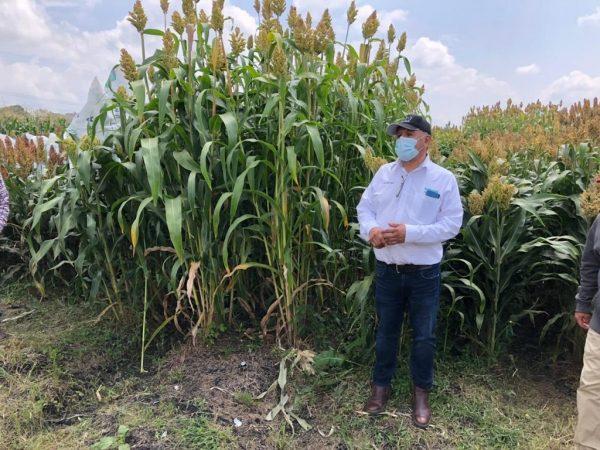 Región Lerma- Chapala y Bajío, considerada las de mayores rendimientos de maíz